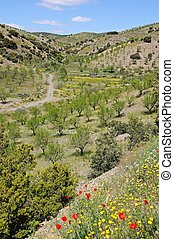 Countryside in Spring, Almeria.