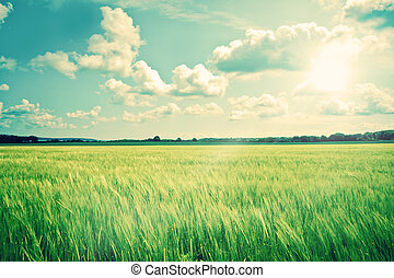 Countryside landscape with crops and sunshine - High...