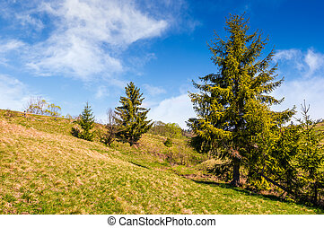 countryside landscape with forest on a hill side - forest on...