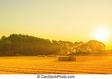 Countryside landscape with straw bales