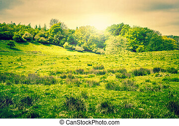 Countryside landscape with sunshine