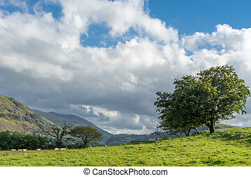 Countryside of the Lake District
