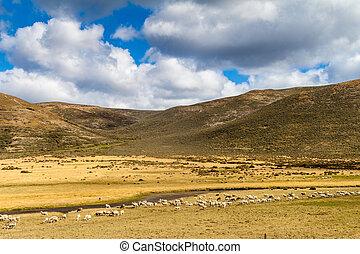 Countryside of Tierra del Fuego island, Chile
