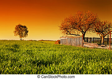 Countryside orchard landscape at sunset. Spring time