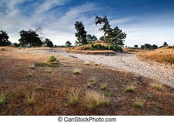 path among sand dunes