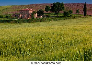 Countryside, Pienza, Tuscany, Italy