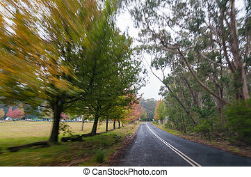 Countryside road with autumn trees on the sides