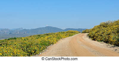 Countryside road with beautiful flower blooming