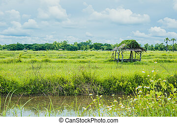 countryside rural landscape view