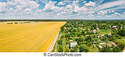Countryside Rural Landscape With Small Village, Gardens And Yellow Wheat Field In Spring Summer Day. Elevated View. Panorama
