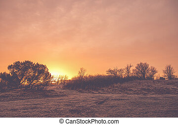 Countryside sunrise with trees