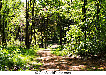 Countryside walk with path winding through trees