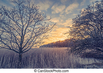 Countryside winter landscape in the sunrise
