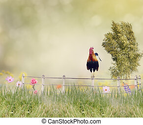 Rooster on a fence