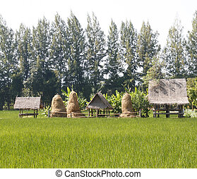 countryside with paddy field