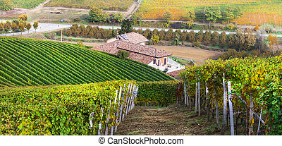countryside with rows of vineyards in Tuscany, famous wine region of Italy