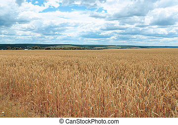 Countryside with wheat field and cloudy sky
