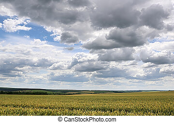 Countryside with wheat field and stormy sky