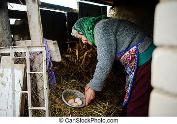 countrywoman, oeufs, house., personnes agées, rassemble, poule