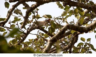 coup, écureuil, arbre, en mouvement, fruits, manger