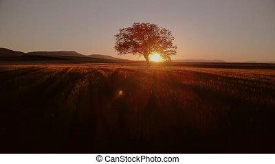 coup, aérien, sunset., cinematic, overflying, arbre, ...