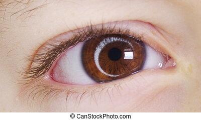 coup, appareil photo, oeil, humain, haut., pupil., macro, iris, yeux, enfants, haut, peu, boy., regarder, eyes., enfant, fin, fermer, mouvement, ouverture, brun