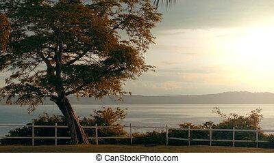 coup, barrière, piquet, arbre, océan, négligence, blanc,...