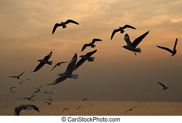 coup, beac, coucher soleil, mouette, pu