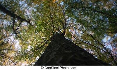coup, cime arbre, perspective, résumé, au-dessous, tourner