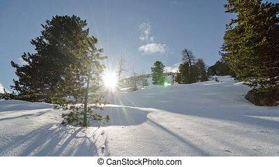 coup, hiver, neigeux, sur, arbres, coucher soleil, colline, défaillance temps, chariot