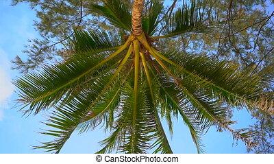 coup, point, arbre, -, haut, exotique, personne, paume, ...