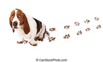 coupable, chien, à, boueux, pattes