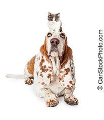 coupable, chien de chasse, pose, basset, chien, regarder