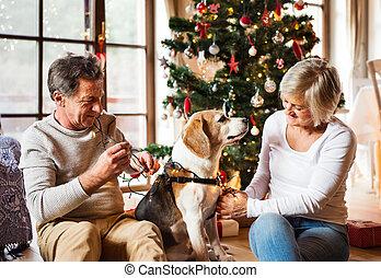 couple, arbre, chien, devant, personne agee, noël
