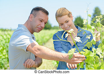 couple checking grape vines