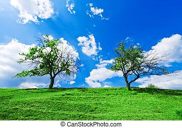 couple, ciel, arbres, nuageux, sous