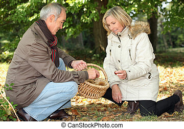 Couple collecting chestnuts in the woods