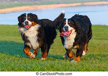 Couple dog run