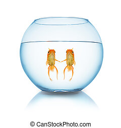 couple fishes in love in a fishbowl