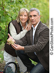 Couple gathering grapes