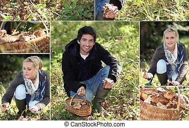Couple gathering mushrooms