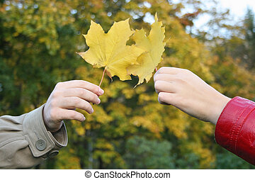 couple hands with maple leaves