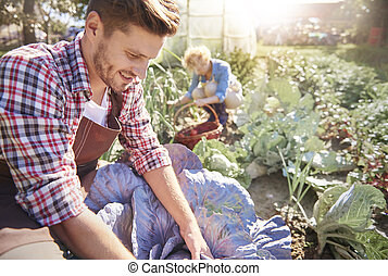 Couple harvesting vegetables in sunny garden