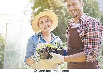 couple, haut, seedlings, fin, pot, heureux