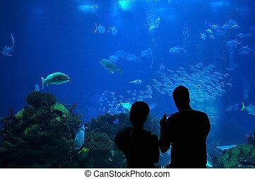 Couple in a Big Aquarium