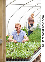 Couple In Greenhouse On Organic Farm Checking Plants