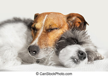 couple of loving dogs in bed close together
