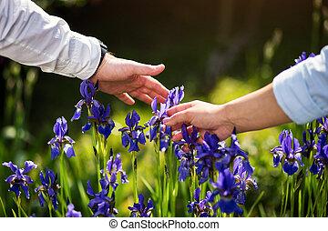 couple in love hands touching iris flower,Blue iris flower...