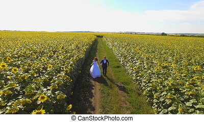 Couple in love walking next to sunflower field on summer day. Aerial footage.