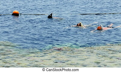 Couple is snorkeling at the tropical sea resort - Couple is...